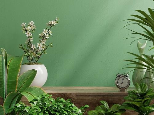 Mur végétal intérieur pour particulier